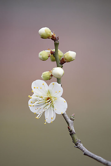 Photo (2010/02/13 万博自然文化園・花の丘) ハコベの花も沢山咲き... 万博公